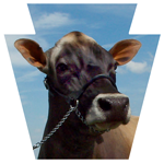 Pennsylvania Jersey Cattle Association Logo